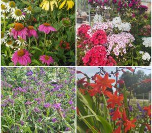 Vivaces à fleurs et feuillage décoratif