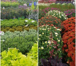 Plantes fleuries et feuillages décoratifs
