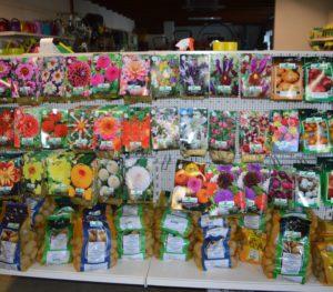 Bulbes de fleurs et plants de pomme de terre